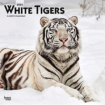 النمور البيضاء 2021 التقويم مربع من قبل براونتروت