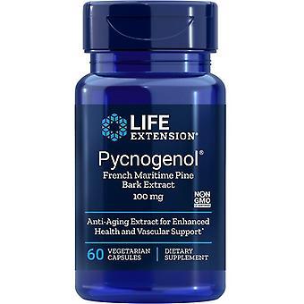 Estensione della vita Pycnogenol Francese Estratto di corteccia di pino marittimo 100mg Vegicaps 60