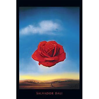 Salvador Dali Rose Poster Print meditatieve steeg Poster Poster afdrukken