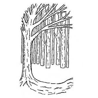 Creative Expressions Umount A6 Tree Background Stamp