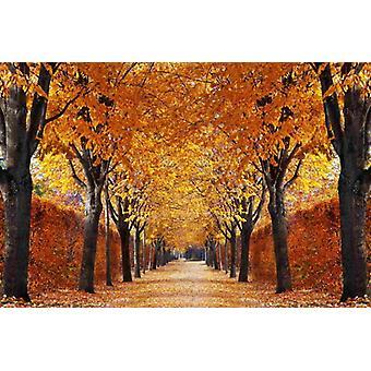 Wallpaper Mural Autumn Alley
