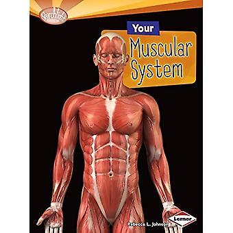 Votre système musculaire