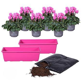 MoreLIPS® - Alpenviooltje DIY-balkon-plantenset - 6X Alpenviooltje - inclusief potgrond Cyclamen