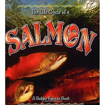 The Life Cycle of a Salmon (Life Cycle of A...(Paperback))