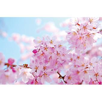 Flor de cerezo mural de papel pintado