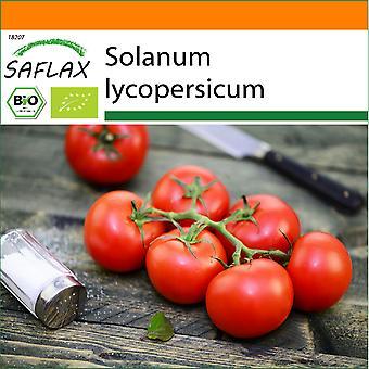 Saflax - Garten in der Tasche - 10 Samen - Bio - Tomate - Matina - BIO - Tomate - Matina - BIO - Pomodoro - Matina - Ecol'gico - Tomate - Matina - BIO - Tomate - Matina