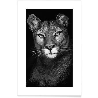 JUNIQE Print -  Lioness - Safari-Tiere Poster in Grau & Schwarz