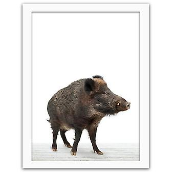 Picture In White Frame, Wild Boar