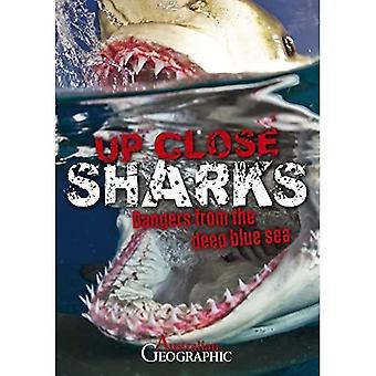 Up Close Sharks (Up Close)
