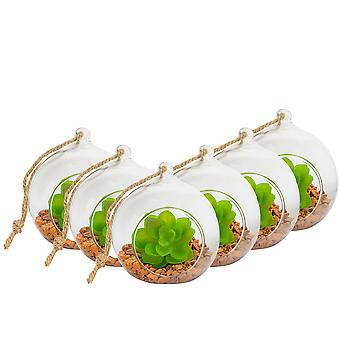 Nicola Spring Glass Plant Terrarium Set for Succulent Plants Ferns Cactus - Tabletop or Hanging Display - 100mm - Pack of 6