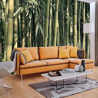 Tapet - Bambus Eksotiske