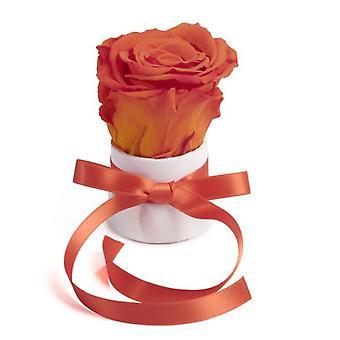 Rose Box Wei Round Infinity Rose Liten Vit