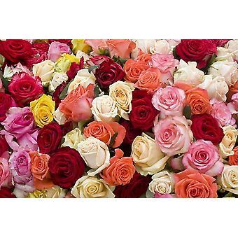 Tapet väggmålning rosor