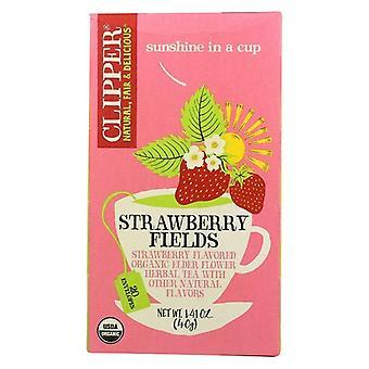 Clipper Strawberry Fields Thé biologique