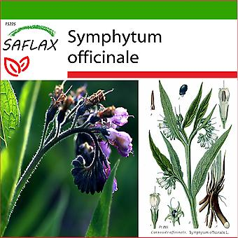 Saflax - 15 seeds - With soil - Comfrey - Consoude - Consolida maggiore - Consuelda - Beinwell