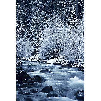 USA Willamette National Forest Oregon Salt Creek with Snowy Trees PosterPrint