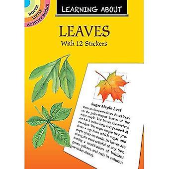 Leren over bladeren: met 12 stickers