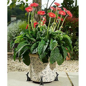 Potty Feet Decorative Hare Themed Plant Pot Feet - Bronze Color - Set of 3
