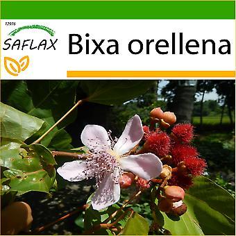 Saflax - 20 zaden - met bodem - Lipstick boom - Arbre rouge à lèvre - Achiote - Achiote - Lippenstift - Strauch
