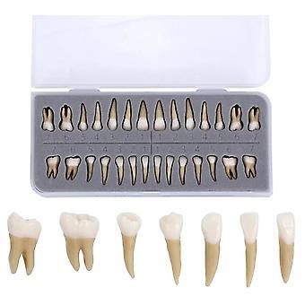 Implante Dental Dentista Pratica Produto Dentes Dentários Modelo