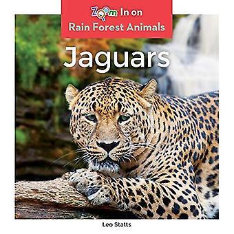 Jaguars (Rain Forest eläimet)