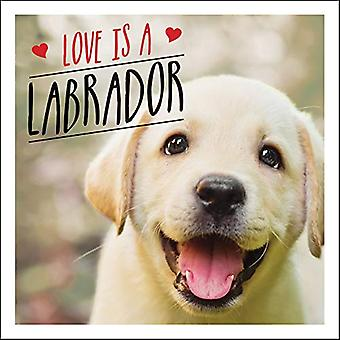 Love is a Labrador - A Lab-Tastic Celebration of the World's Favourite