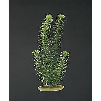 Marina AQUASCAPER Peq.  ANACHARIS 12,5 cm (Fish , Decoration , Artificitial Plants)