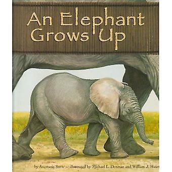 Un éléphant grandit (animaux sauvages)