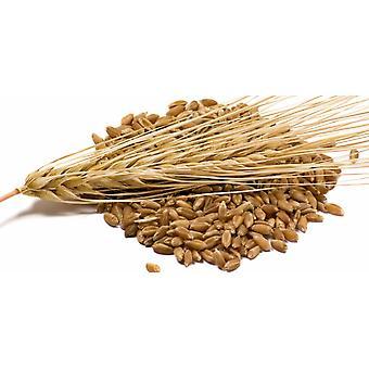 Barley Kernels -( 22lb )