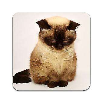 2 ST British Shorthair Kittens Coasters