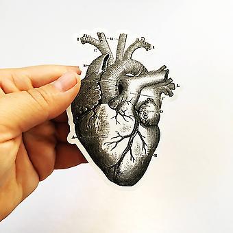 Anatomische Herz Vinyl Aufkleber
