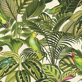 Perroquet tropical de Rasch