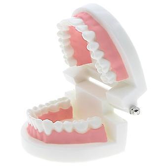 Kids Early Education, Brushing Training, Oral Cavity Teeth Dental Model,