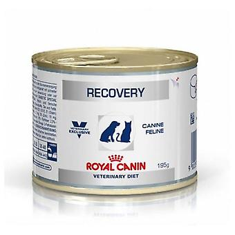 Royal Canin  Recovery Canine & Feline (Dogs , Dog Food , Wet Food , Veterinary diet)