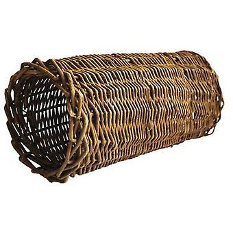 Natuur eerste Willow buis