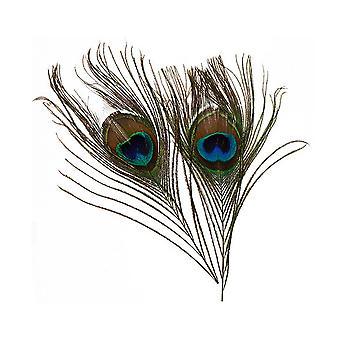 2 Peacock Eye 20cm Veren voor ambachten