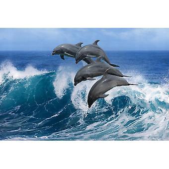 Fondo de pantalla Mural Delfines Juguetones