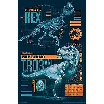 Jurassic World 2 - T-Rex Poster Print