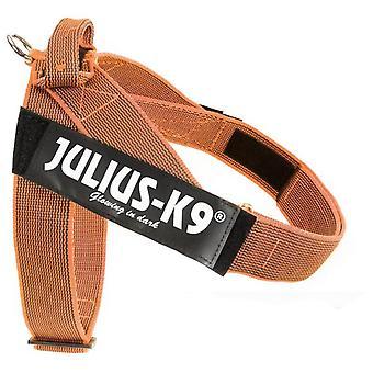 Julius K9 Arnes IDC Cinta Färg & Grå (Hundar, Kragar, Leder och Selar , Selar)