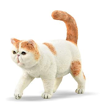 CollectA Exotic Shorthair