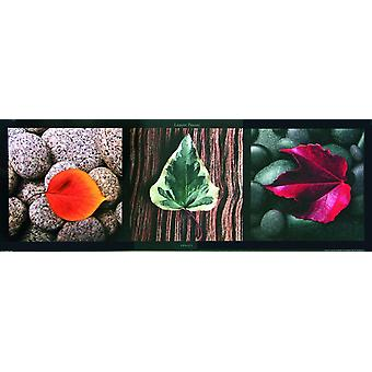 Small format leaves leaves - colorful (art print) Laurent Pinsard