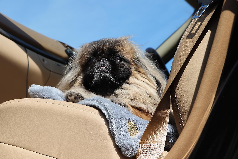 Teddy bear plaid Dog / Pet Blanket grey