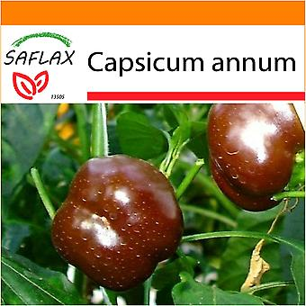 Saflax - Garden in the Bag - 10 seeds - Pepper - Sweet Chocolate x - Paprika - Sweet Chocolate X - Peperoncino Sweet Chocolate - Pimiento sweet chocolate - Paprika - Sweet Chocolate x
