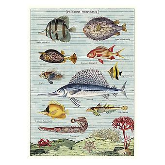Cavallini Tropical Fish Vintage Poster   Wall Art Print Craft Decoration