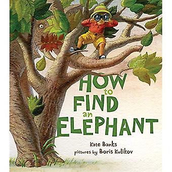 Wie man einen Elefanten finden