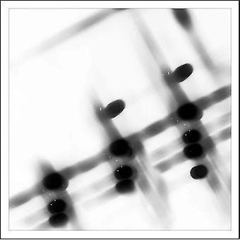 Gregor Samsa - 1/1/1900 03:36 [CD] USA importare