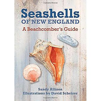 Coquillages de la nouvelle-Angleterre: Guide d'un Beachcomber