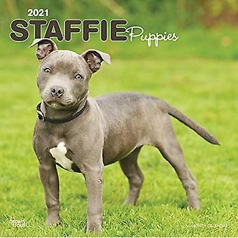 ستافوردشاير الثور الكلب الجراء 2021 مربع Btuk التقويم بواسطة براونتروت