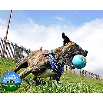 JW Pet iSqueak Ball Dog Toy