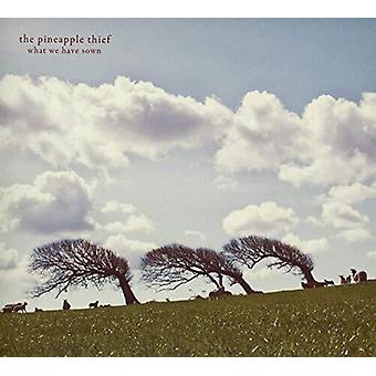 Pineapple Thief - What We Have Sown [Vinyl] USA import